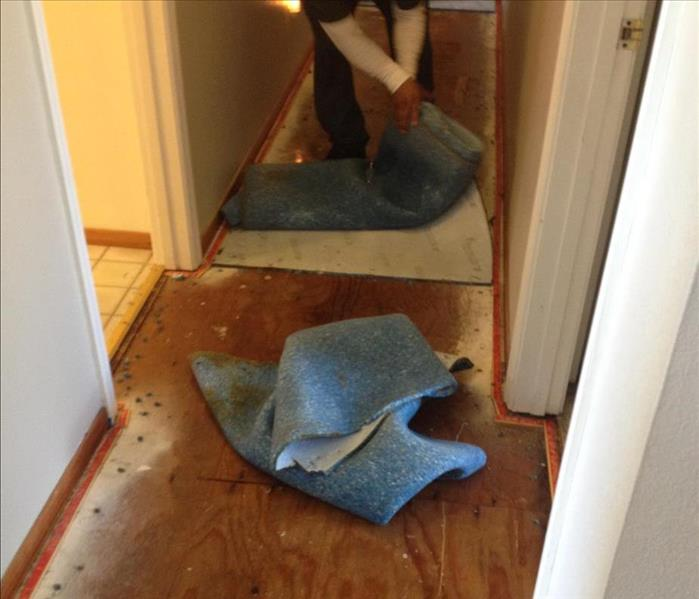 Water Damage Extremely Soaked Carpet in Novato, CA