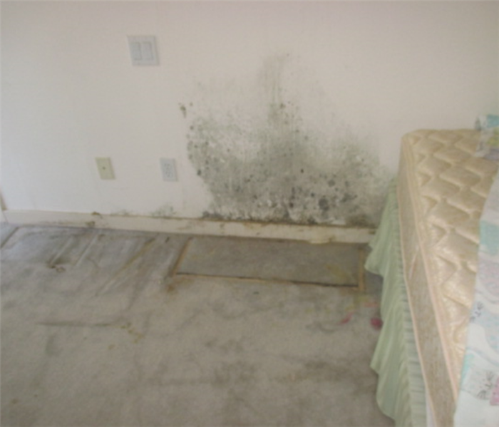 Mold Remediation Does Your Sonoma County Home Have A Mold Problem?